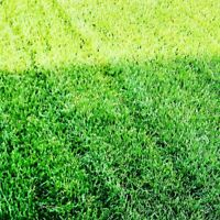 Eco Lawn Professional Lawn and Garden Services
