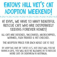 Eatons Hill Vet's Cat Adoption Weekend! Eatons Hill Pine Rivers Area Preview