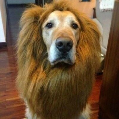 Golden Retriever Dog Costumes (LARGE DOG LION MANE WIG LOTHES COSTUME FUNNY COLLAR GOLDEN RETRIEVER)