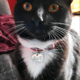 Missing CAT male black and white lost 21/4/21