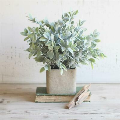Sage in Square Container