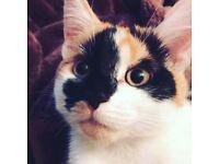 Kitten for sale 😩