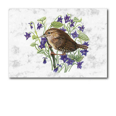 Wren Birthday Greetings Card A6 size (Ref eb260a6) Animal British Bird Wildlife