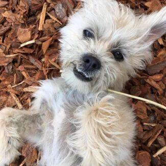 Lost Dog Burleigh