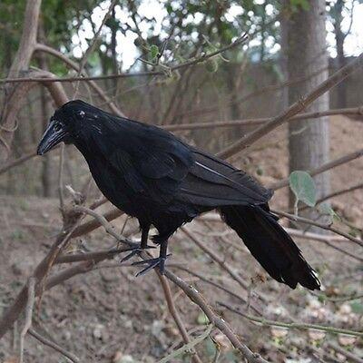 Realistic Raven Halloween Prop Black Feathered Crow Birds Tree Decor Accessories - Raven Decor
