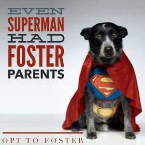 Niagara dog rescue is in need for foster homes