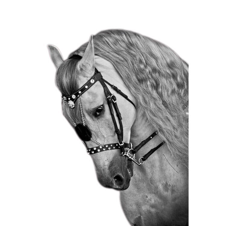 Horse Bridle Without Rein Harness Headstall Thickened Halter Equestrian Gear