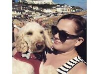 Home From Home for your Dog - Dog Sitting Holiday Walking