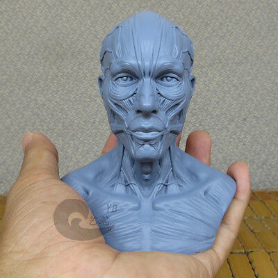 Pocket Size Male 1 4 Head Sculpture Anatomy Superficial Muscle Drawing 10003