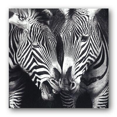 Grevy's Zebra Birthday Greetings Card (Ref eb409) Animal Wildlife