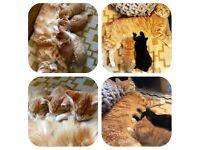 Lovely kittens 🐱
