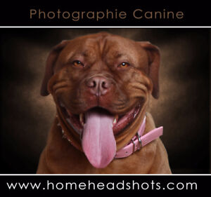 Nice dogs wanted for professional photography