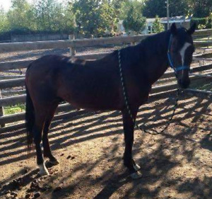 Looking For One Transport for One Rescue Horse