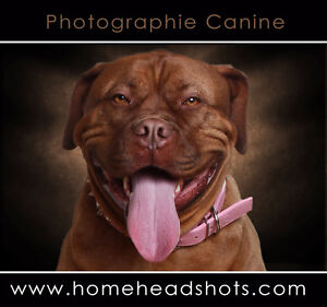 Artistic dog photography services Montreal