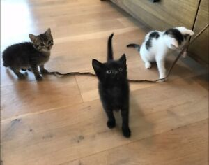 Kittens - Free to a good home