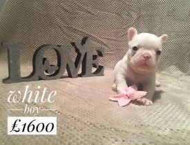 AMAZING QULITY French bulldog puppies kc registered liter of 7