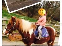 13.2hh skewbald cob pony