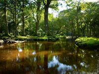LIVE-IN CARER/HOUSEKEEPER/PA - New Forest, Hampshire - £490 pw