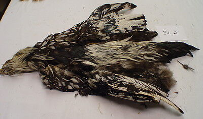 Silver Lace Cochin Rooster Chicken Skin, Feathers, Fly Tying, Crafts (SL2)