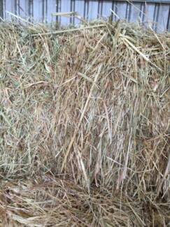 CEREAL HAY Camden Camden Area Preview