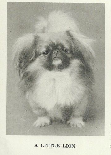 "Pekingese ""P"" - 1931 Vintage Dog Print - MATTED"