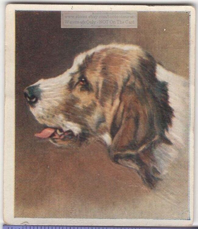 Otterhound Dog Pet Animal Canine c80 Y/O Trade Ad Card