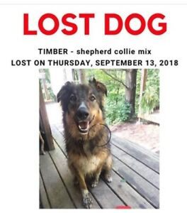 Lost Dog - please call 905-902-6067