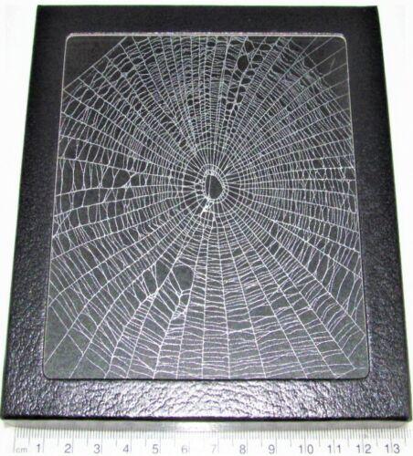 Orb weaver spider web framed preserved USA W7