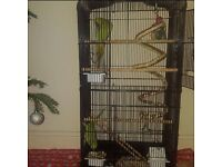 Pair of Redneck Parrots with the cage.