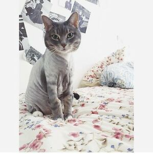 Recherche une gardienne pour chats / Looking for a catsitter