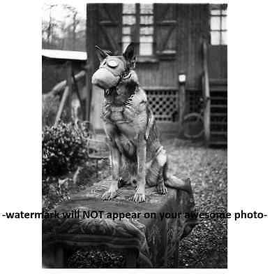 Vintage Scary Dog Gas Mask PHOTO German Shepherd Creepy WORLD WAR Image