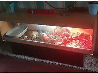 5ft vivarium full set up