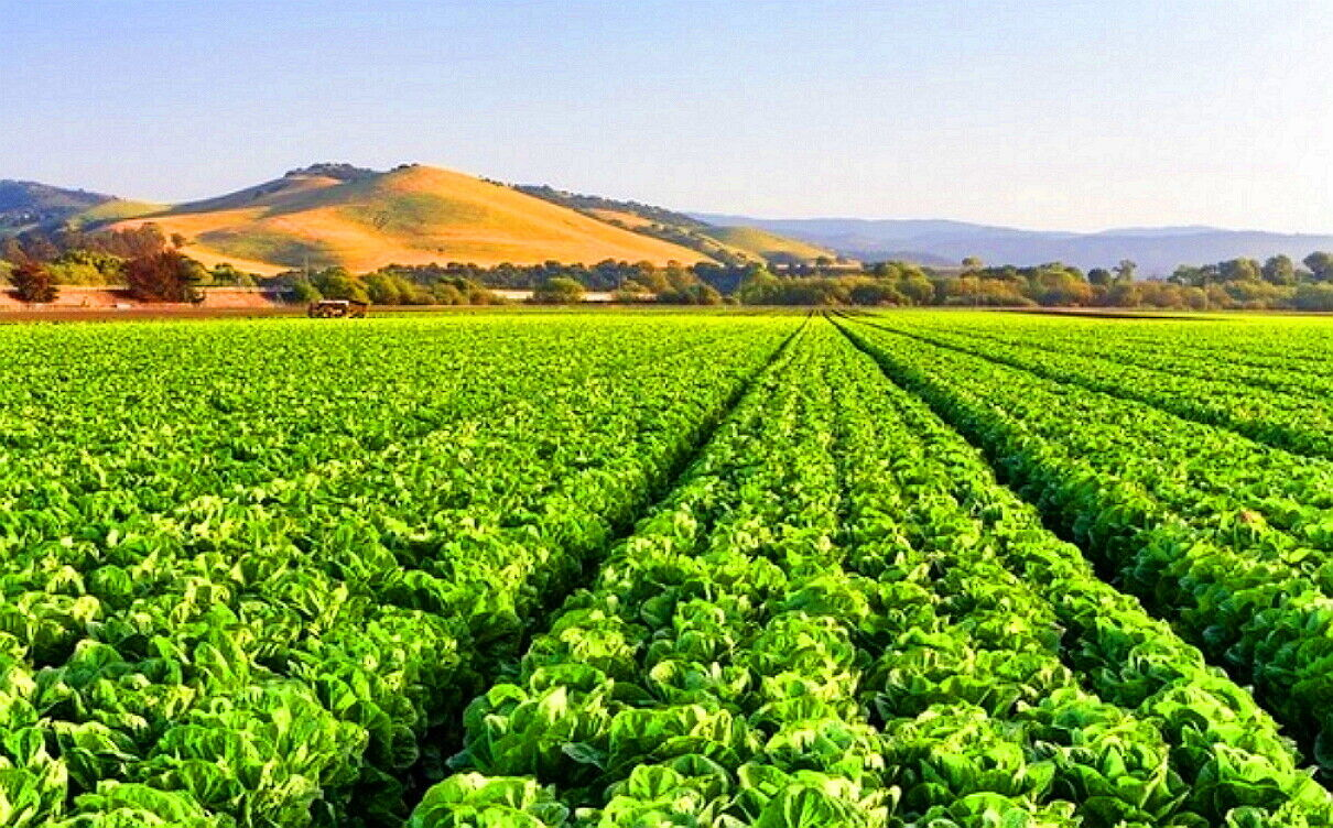 Agricultural Greatness Kettleman City, Ca. Kings COUNTY - $1,000.00