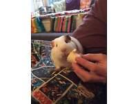 Nichola's Holiday Pets (pet sitter)