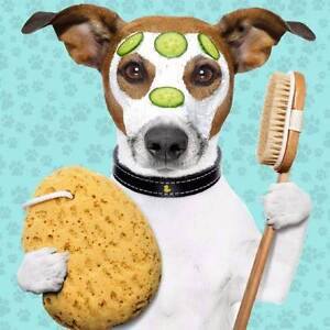 Mobile dog grooming gold coast Gold Coast Region Preview