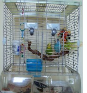Two Young budgies with Vision Cage for sale
