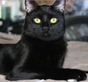 Gorgeous Fort McMurray Cat ......