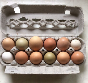 12 Fertilized Hatching Eggs From Mixed Laying Hens - St. Thomas