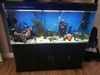 5ft tropical fish tank full setup including fish and equipment