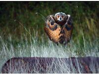 Birds of Prey Photography Workshops