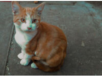 4+ months old ginger male kittens looking for new home