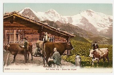 Eiger, Mönch und Jungfrau, Kühe und Senn auf der Alp, Interlaken, ca. 1910
