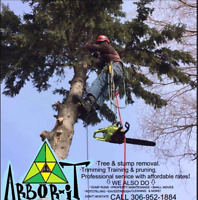 Professional tree removal & stump grinding service