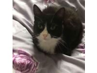 Lost/Missing black and white small female cat from Gwynfor Road, Townhill area, Swansea