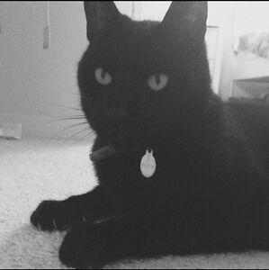 Lost black cat Berwick Casey Area Preview