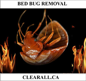 BED BUGS?
