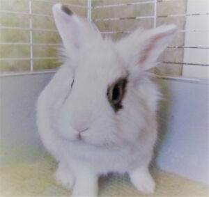 RABBIT TO REHOME