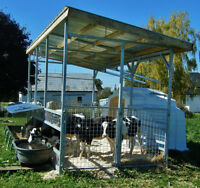 Calf Canopy Housing System (Pigs, sheep, goats, ponies too)