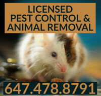 EXPERT PEST CONTROL & ANIMAL REMOVAL 6474788791 MOUSE, RAT, BUGS