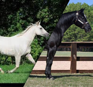 All Black or All White Horse